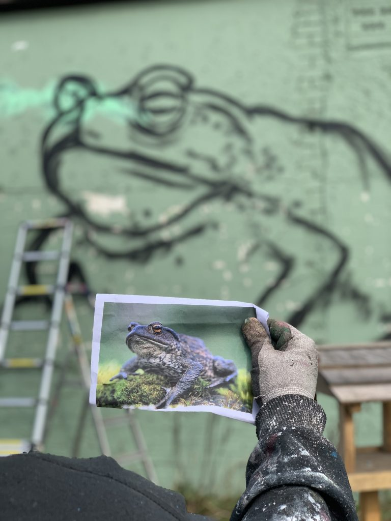 frog picture and outlines