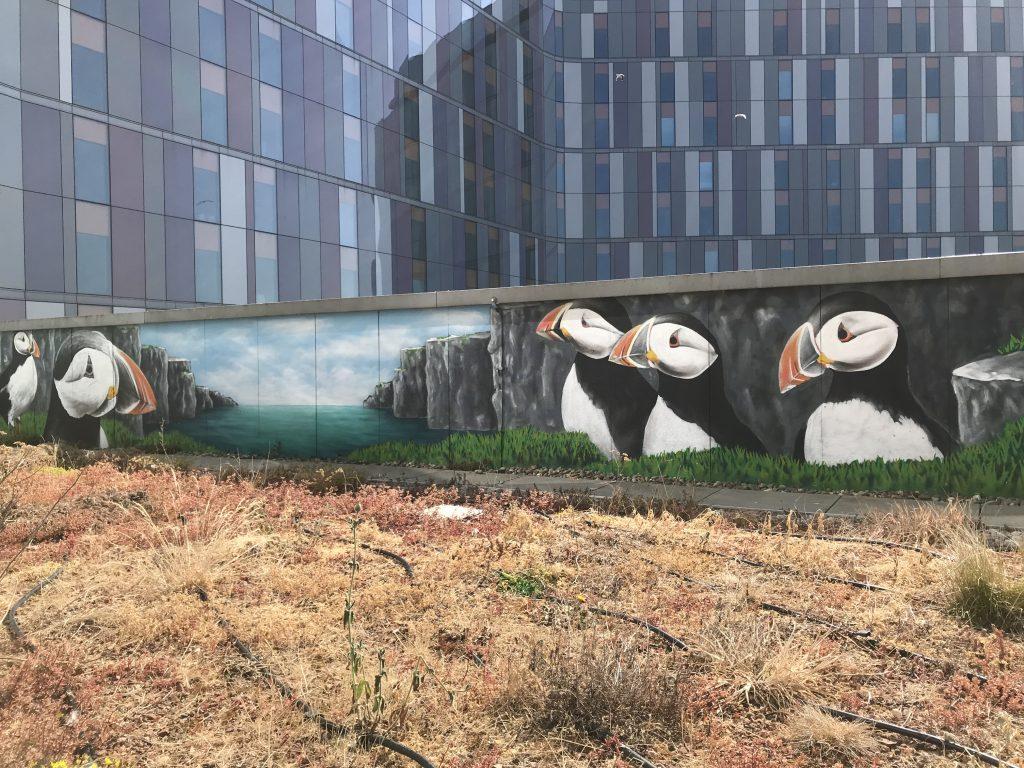 Puffin mural QEUH