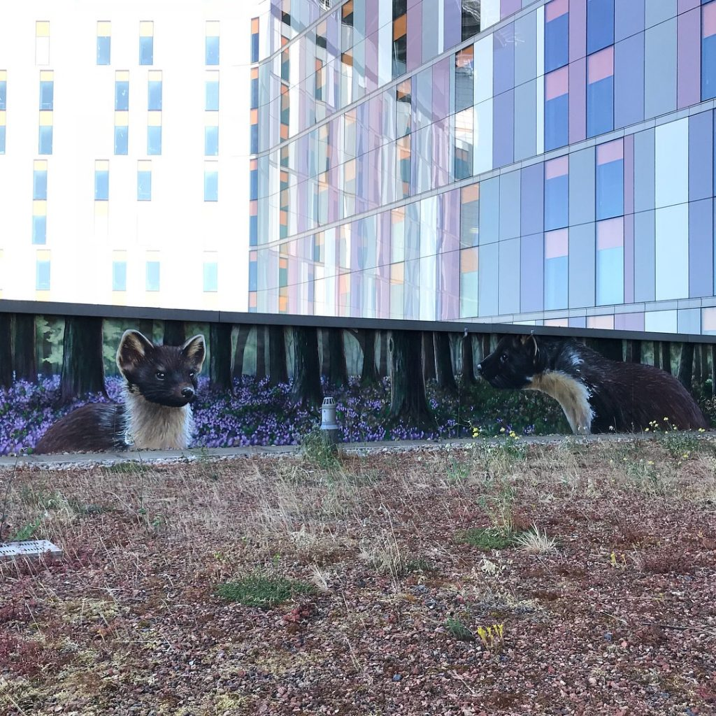 pine marten mural QEUH